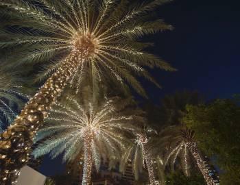 tropical christmas lights