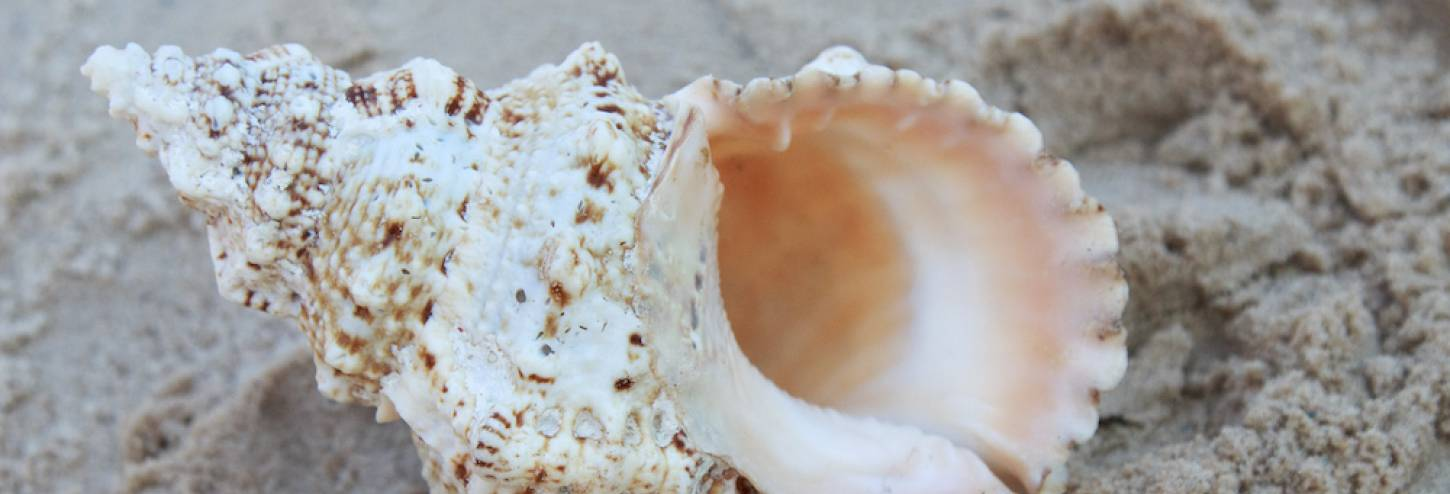 Annual Conch Shell Blowing Contest Key West