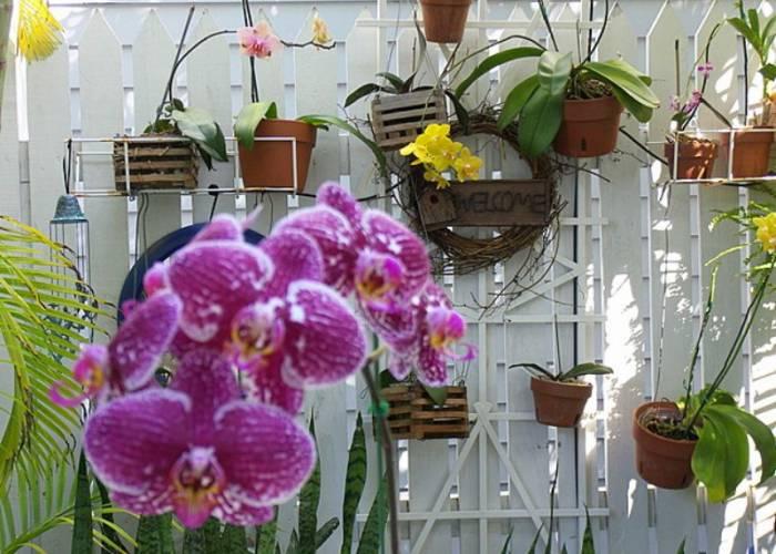 Key West Orchids