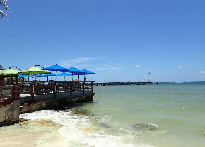 Dog Beach Key West