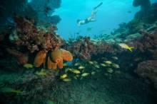 Snorkeling in Key West
