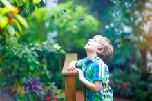 A little boy in a tropical botanical garden