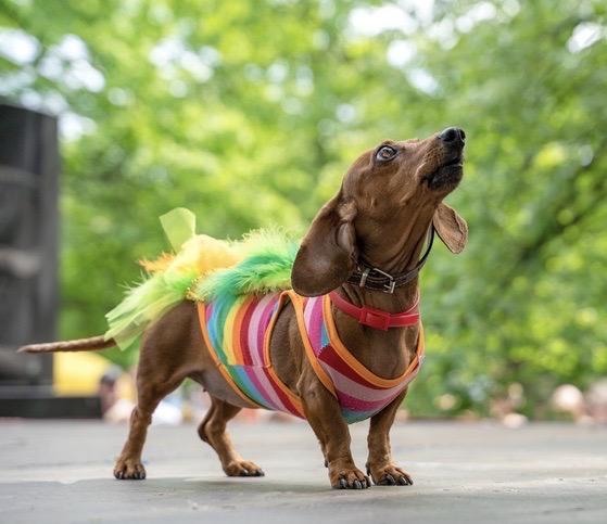 A dog dressed up for Fantasy Fest