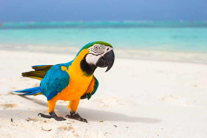 A parrot sits on the beach