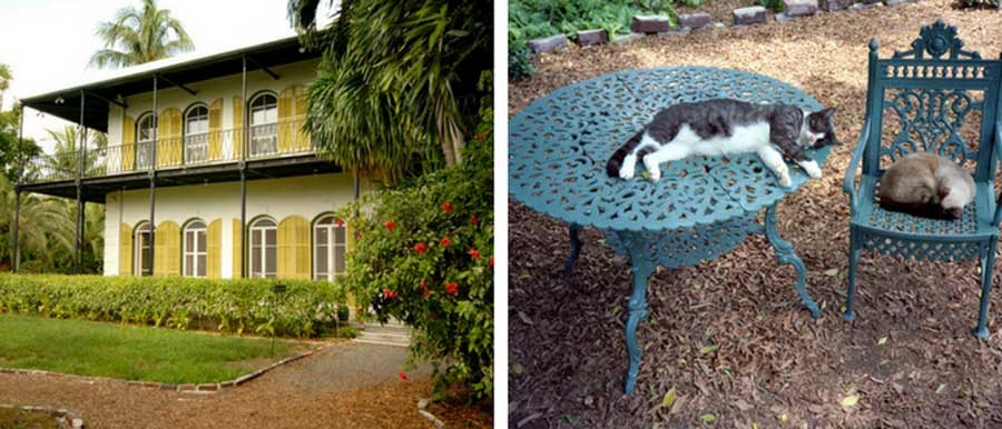Hemmingway House and famous house cats in Key West, FL