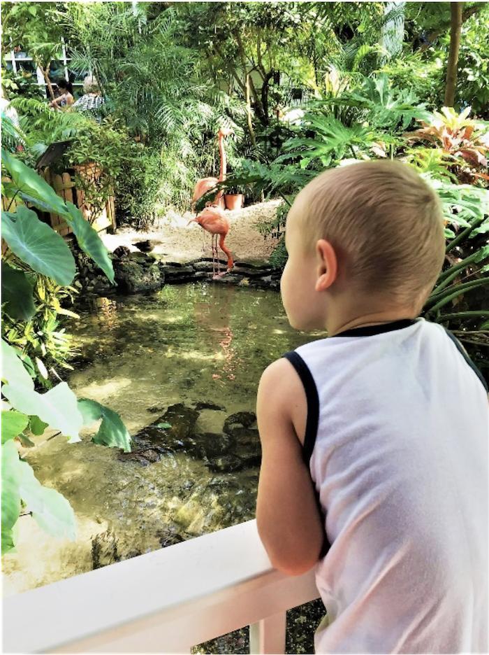 Key West Butterfly Museum