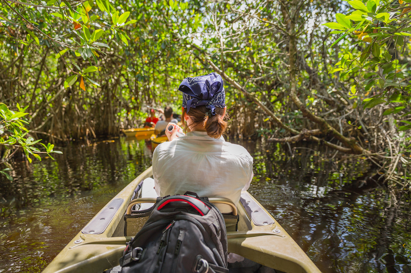 key west kayak tours mangrove forest